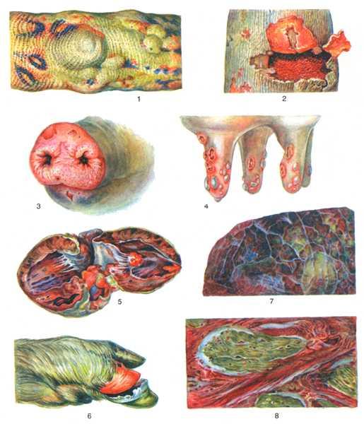 болезнь ящур у животных